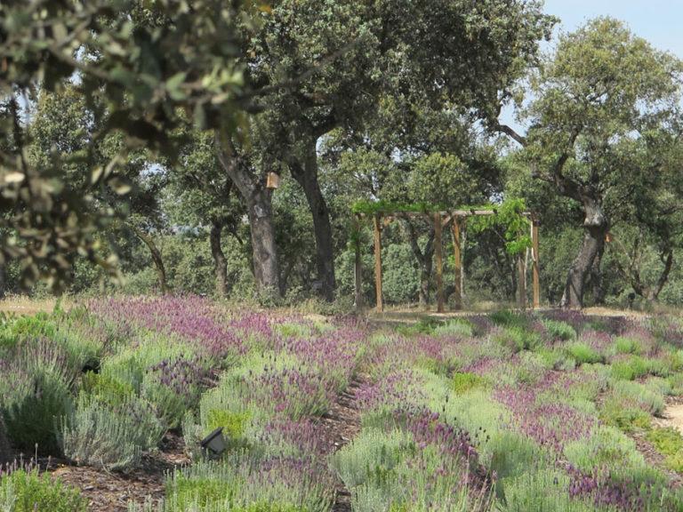 jardinesdecampo-fase1-oropesa28