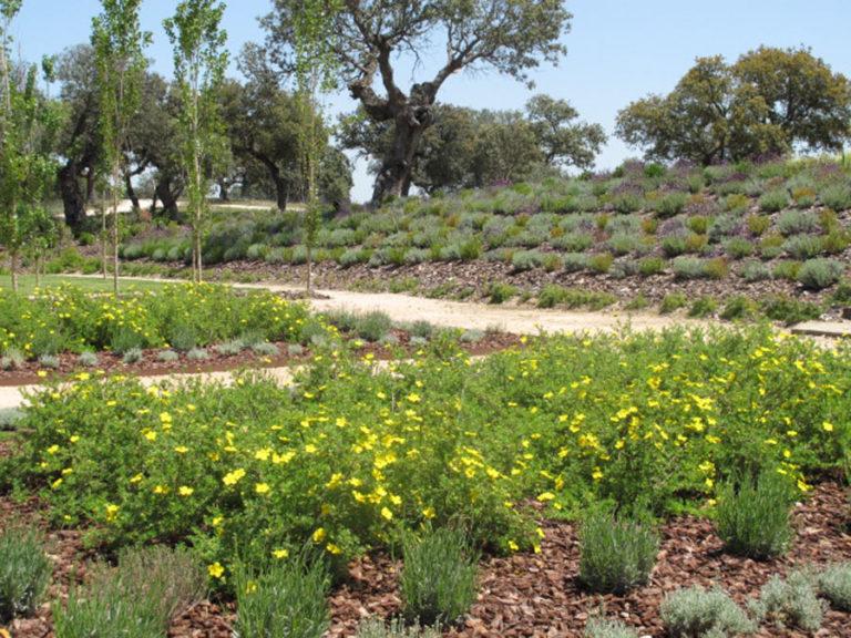 jardinesdecampo-fase1-oropesa6
