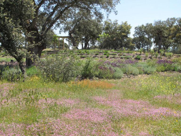 jardinesdecampo-fase1-oropesa8