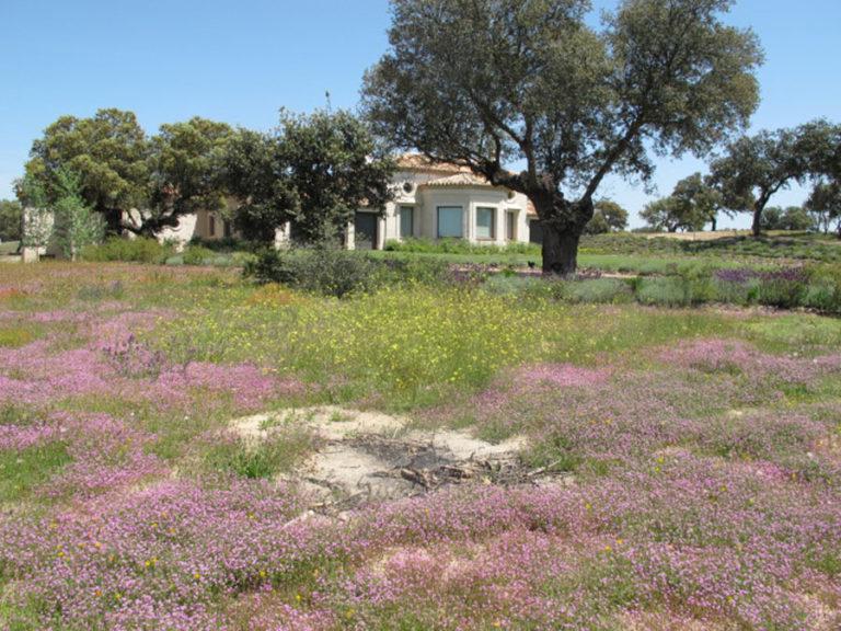 jardinesdecampo-fase1-oropesa9