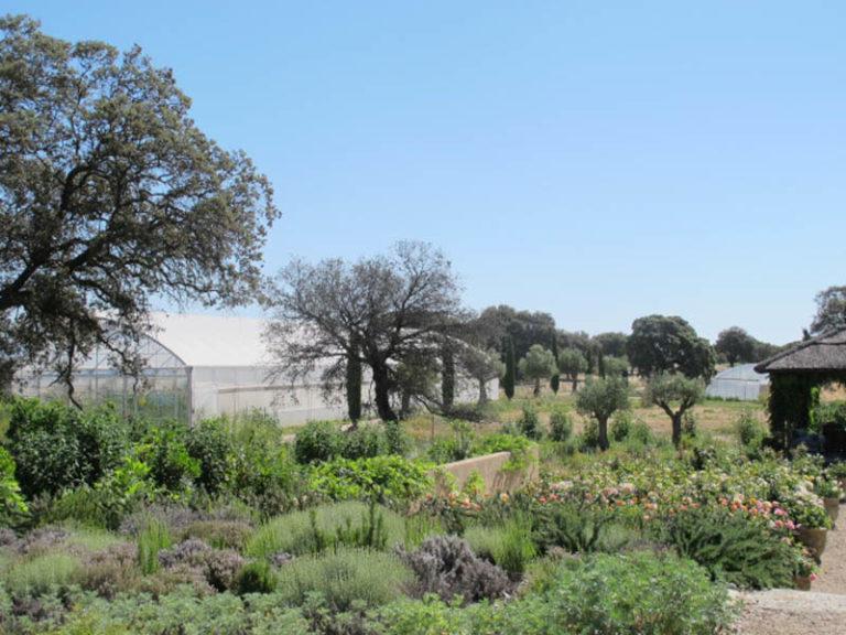 jardinesdecampo-fase1-toledo1128