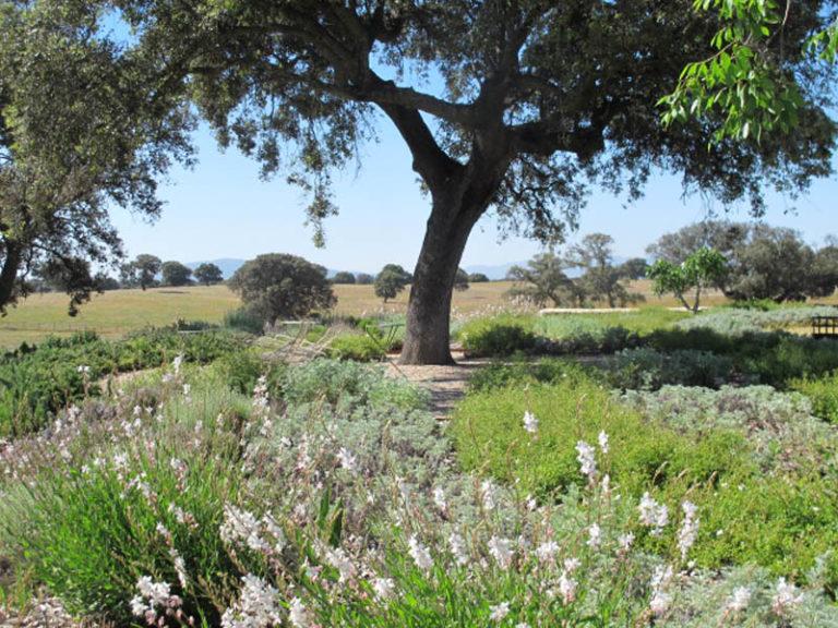 jardinesdecampo-fase1-toledo1132