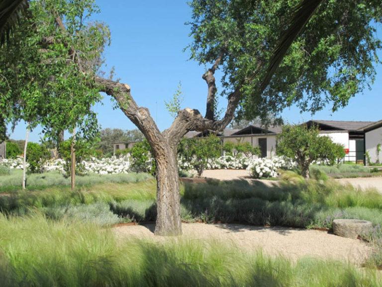 jardinesdecampo-fase1-toledo1133