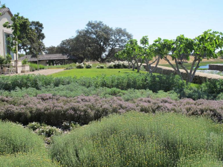 jardinesdecampo-fase1-toledo1134